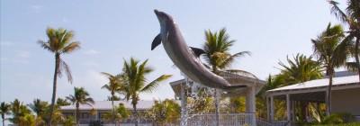 hawk dolphin